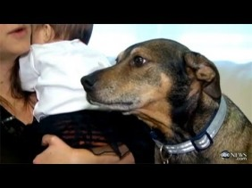 Rescue Dog Duke Saves Dying Baby
