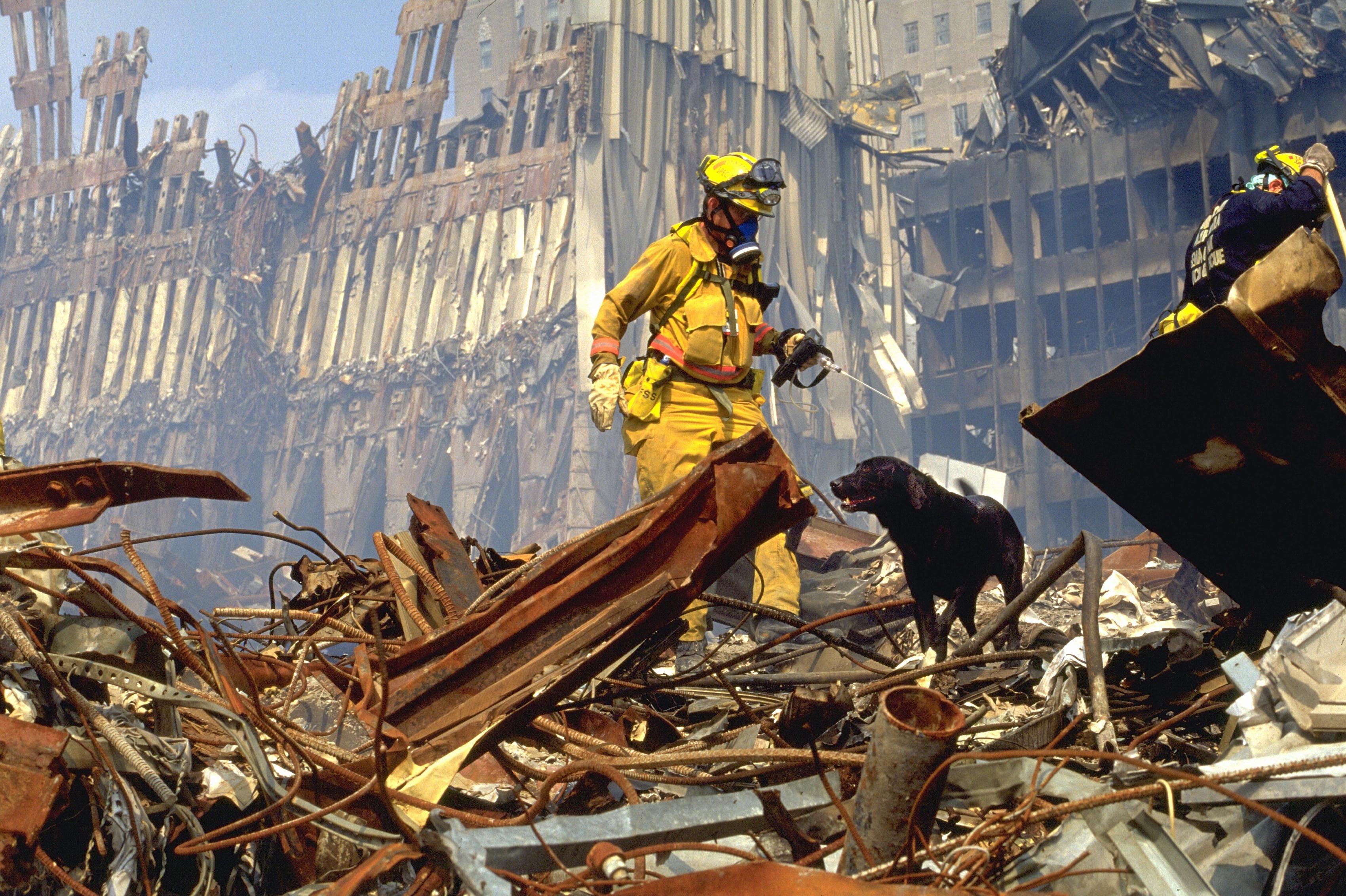 Hero Dog Dogs Of September 11th