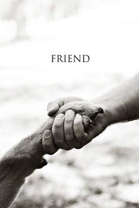 Paw and Human Shake Hands