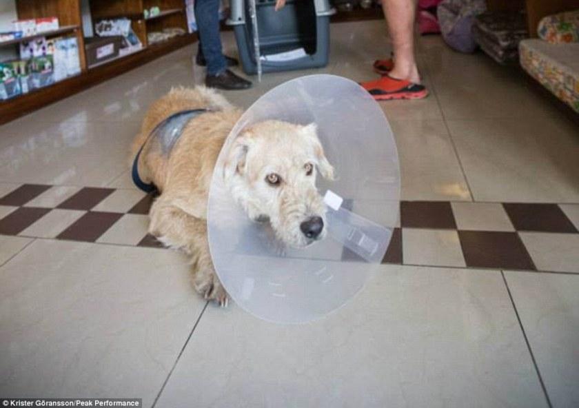 Arthur the Stray Dog