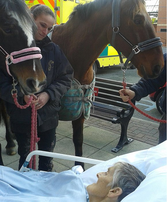 Woman dies after farewell to horse