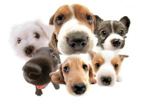 group-of-doggies