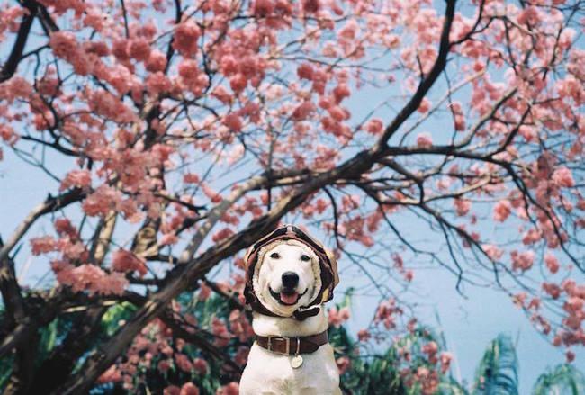 Gluta The Dog