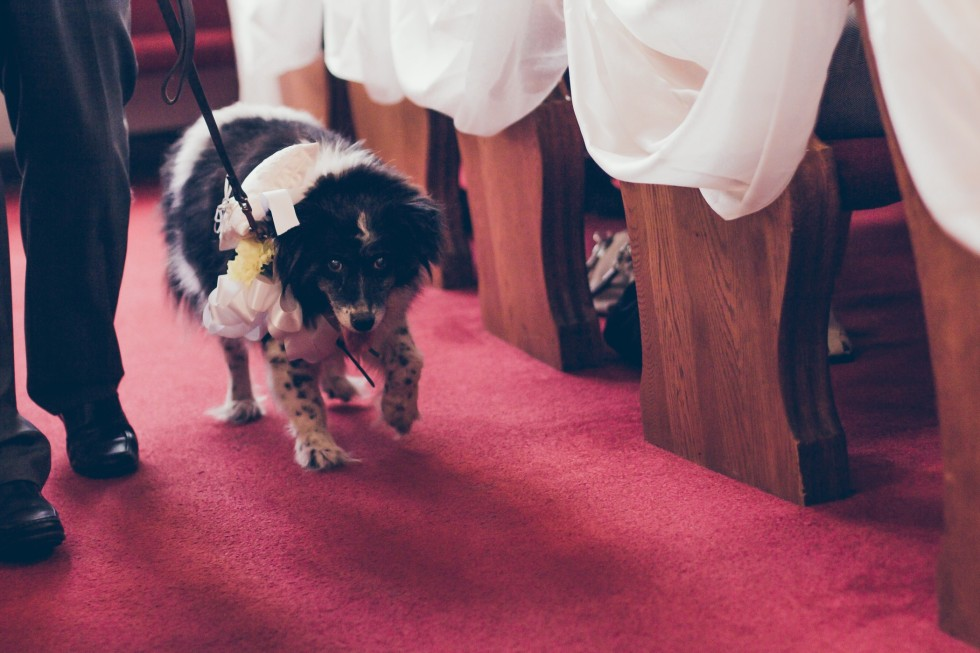 dog at a wedding