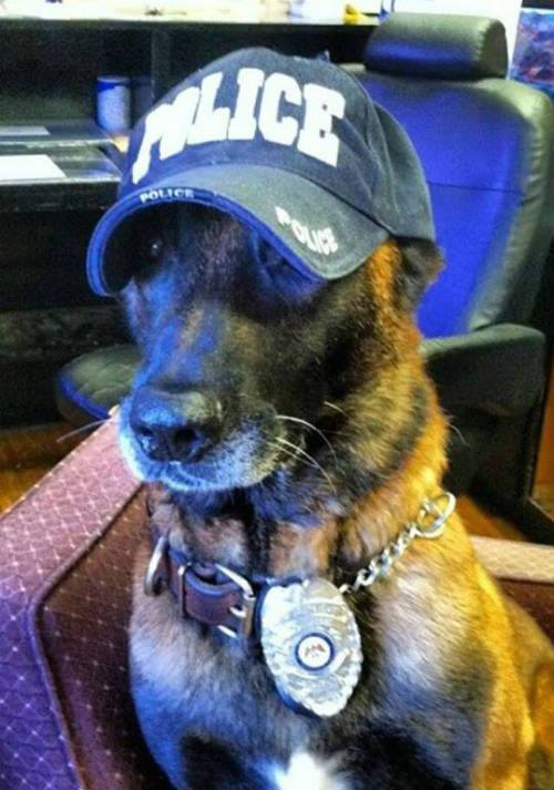 solo k9 police dog