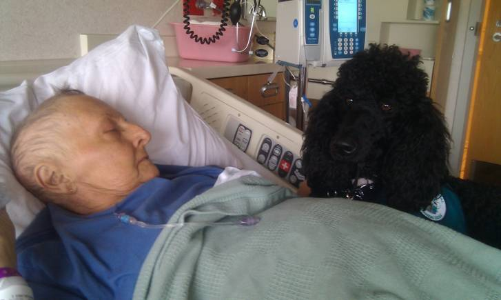 Surprising turns in a caring canine relationship - by Dietrich Gruen, Hospice Chaplain