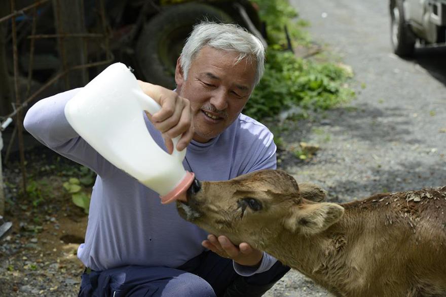 Naoto Matsumura, Guardian of Fukushima's Animals
