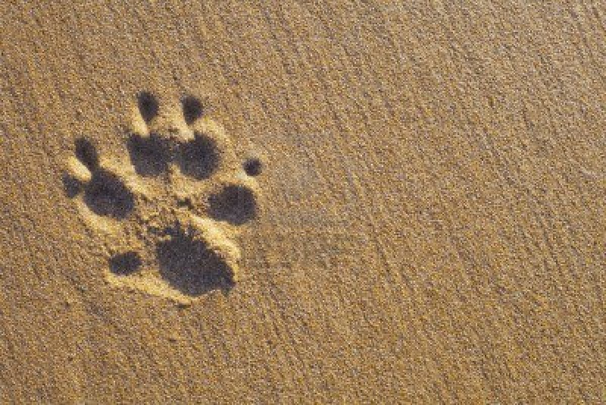 Helping My Dog Die – by Amy Selwyn – Kindness Blog