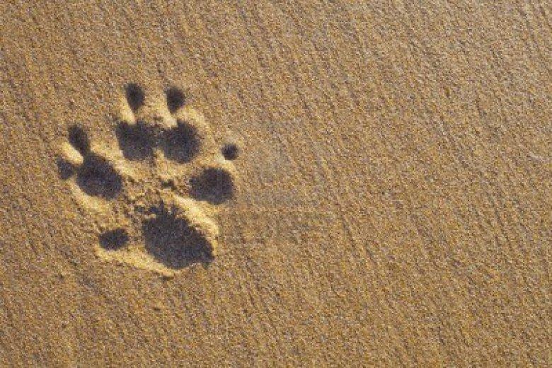 dog's paw