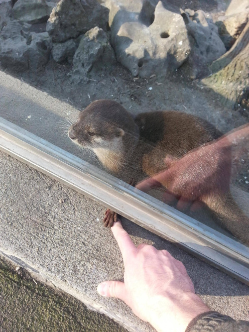 holding hands with an otter