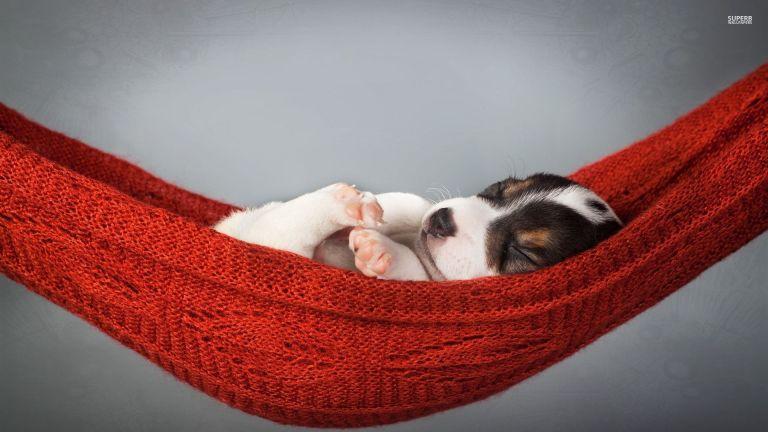 sleeping-puppy-in-a-hammock-33688-1920x1080