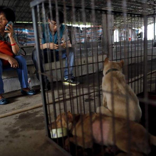 Yang Xiaoyun, rescues dogs in china
