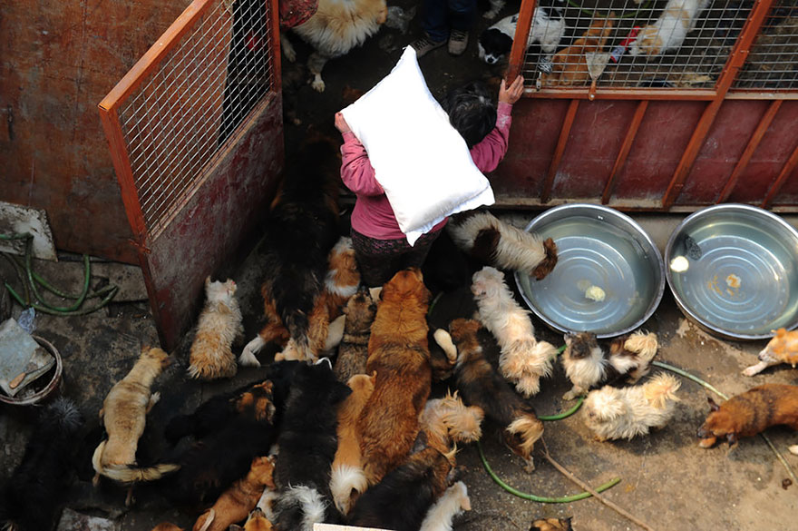 Yang Xiaoyun, rescues dogs in china