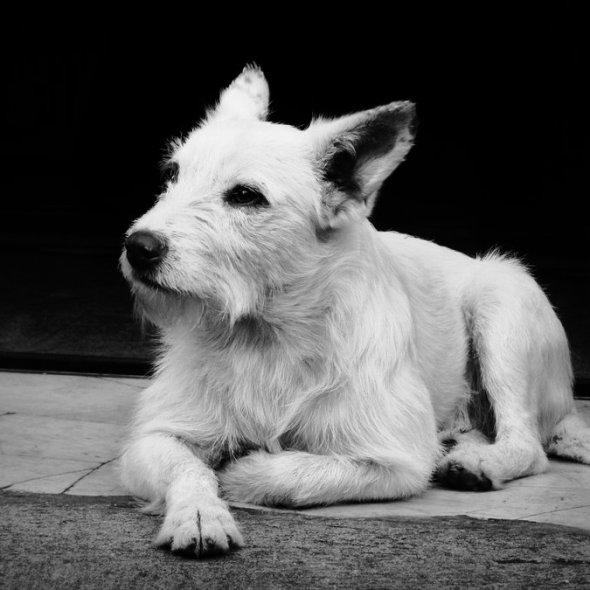 Why My Dog is my Mentor? - By Marc Winn