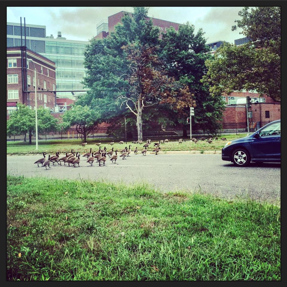 Humans + Geese + Kindness = Hope! :)