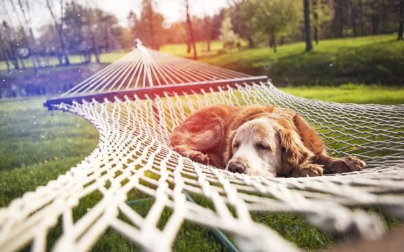 hammock wallpaper