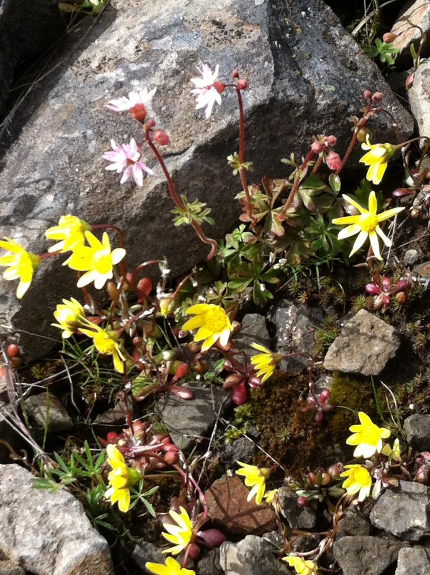 4 spring flowers