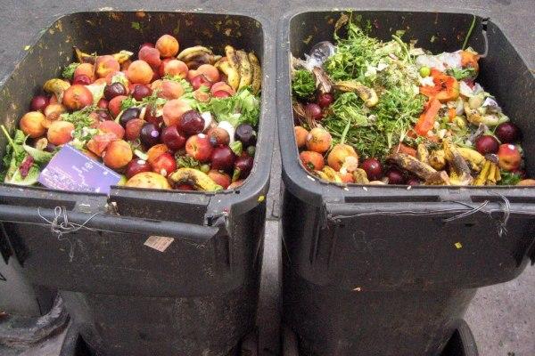 """""""food waste"""""""
