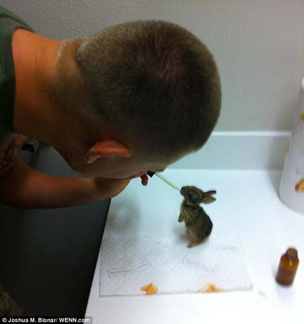 A soldier rescued a baby bunny and then raised him, dedicating hours to feeding the little guy.