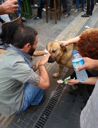 Pedestrians stop to help a dog tear-gassed during a demonstration