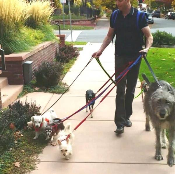 wolfgang2242, who adopts senior dogs and other unwanted pets and gives them a better life