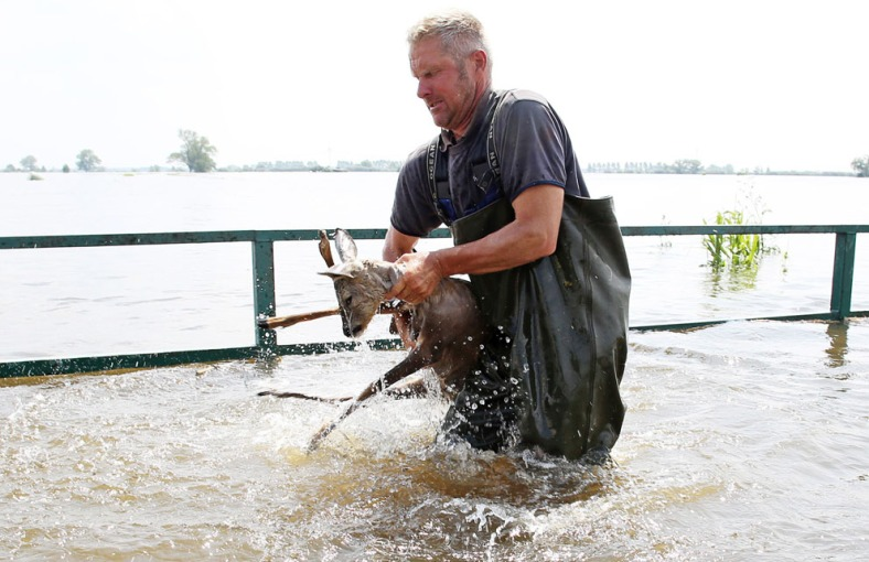 Fisherman Gernot Quaschny rescues a deer from the floods near Schoenhausen, Germany, on June 12, 2013. Due to a broken dike on the Elbe River, several villages in the area were flooded.